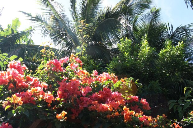 Poppy-Island-Properties-Kuau-27